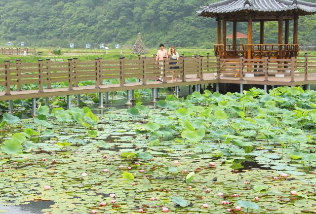 크기변환_고성_상리연꽃공원(3)