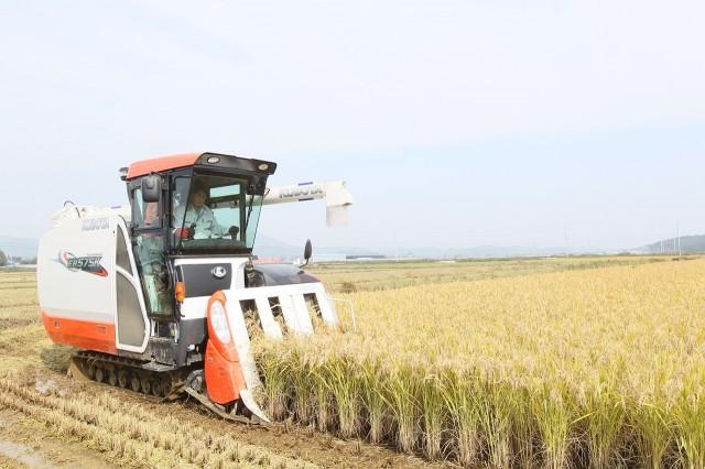 10월19일 이정곤 부군수가 가공용벼를 직접 수확하고 있다 (1).JPG