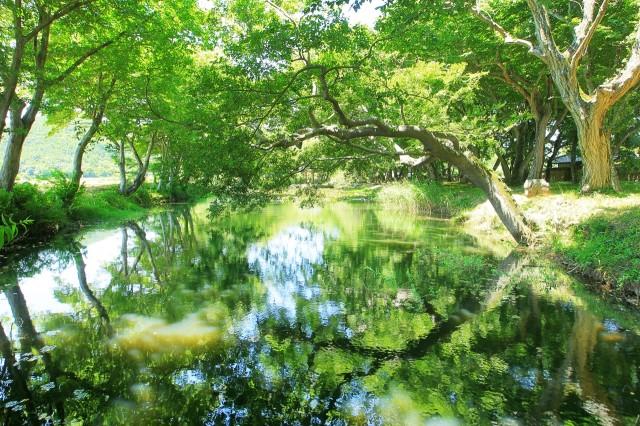 초록으로 물든 고성 '장산숲'에서 즐기는 힐링 (1).JPG