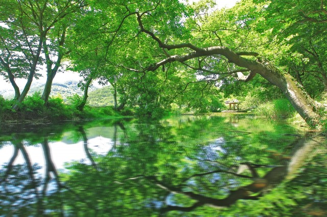 초록으로 물든 고성 '장산숲'에서 즐기는 힐링 (2).JPG