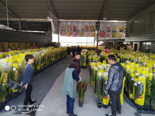 고성양란, 중국시장 진출.jpg