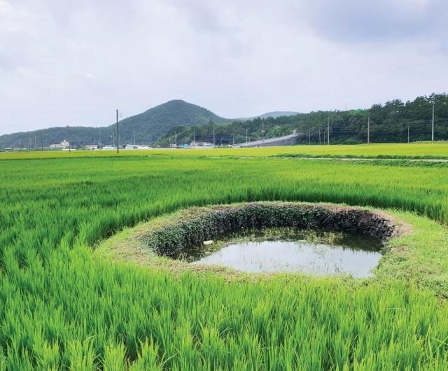 고성해안지역 둠벙관개시스템, 국가중요농업유산 제14호 선정(1).jpg