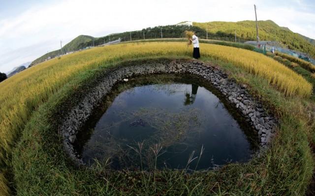 고성해안지역 둠벙관개시스템, 국가중요농업유산 제14호 선정(2).jpg