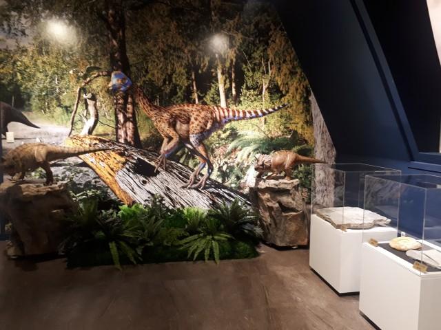 2019고성공룡박물관 기획전시(4).jpg