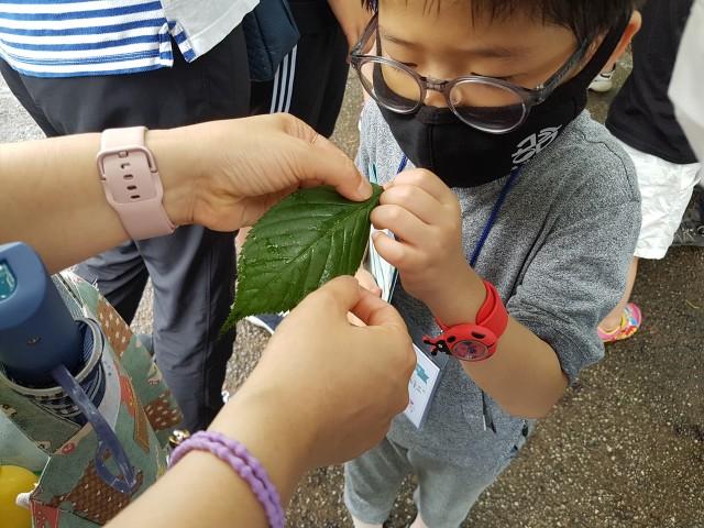 고성공룡박물관 가족 프로그램_벚나무 관찰.jpg