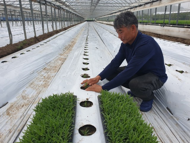 2-1 안개초 농가 새로운 희망을 품다.jpg