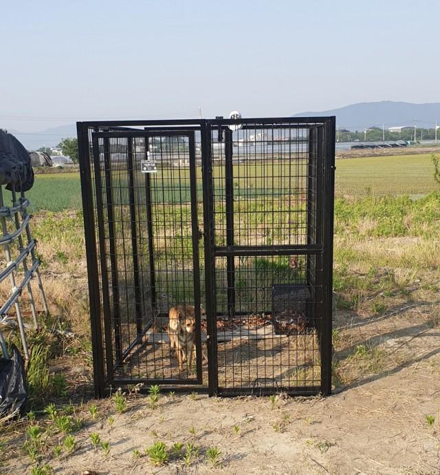 2-1 고성군 야생개 전문 포획단 출동.jpg
